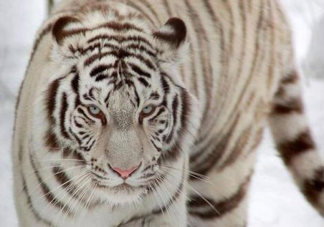 Bientôt le retour en Principauté pour El Tigre