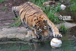 Première image de Radamel touchant le ballon... Ca revient très très bien !