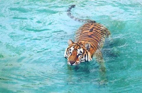 Un bon bain après une bonne grosse journée